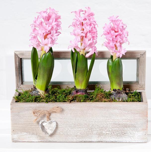 Debenhams Mother's Day Flowers