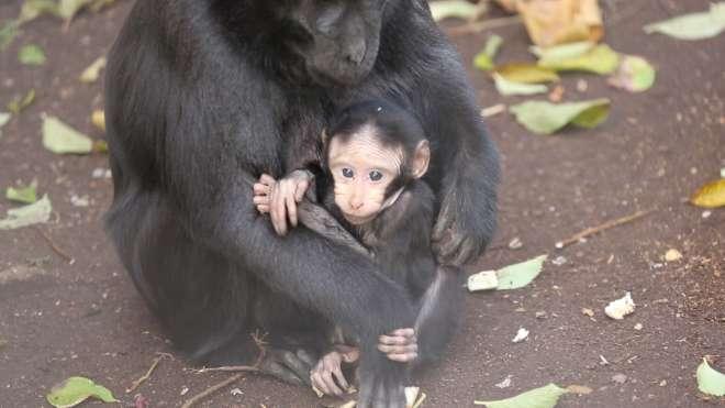 ZSL London Zoo Writers Talks: Randal Keynes on Darwin's Apes @ London Zoo   Regent's Park   United Kingdom