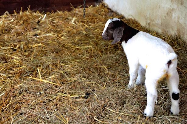 St-Werburghs-City-Farm-Bristol-2