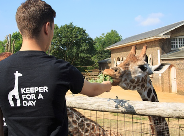 Zoo keeper for a day